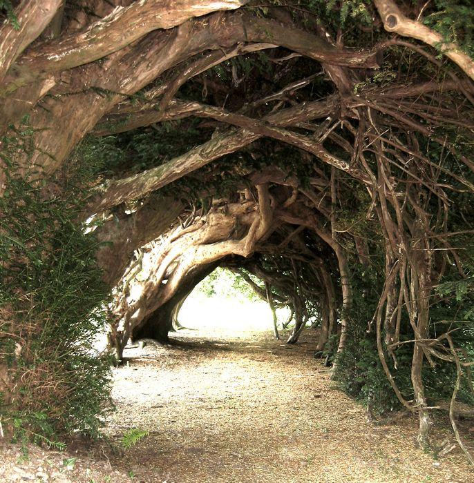Lone Oak Tunnel 6379_tn_Tree%20Tunnel%20in%20Wales