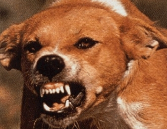 New rabies vaccine may require only a single shot... not 6