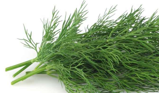 Dill - Anethum Graveolens Good to Ease Swellings and Pain