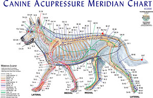 Canine-Meridian-Chart